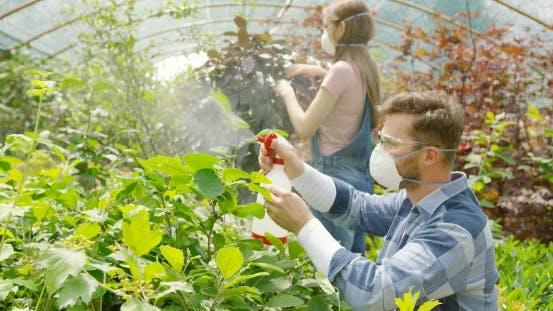 People Spraying Fertilizer on Flowers
