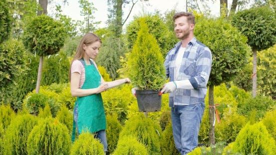 Gärtner mit Topfbaum