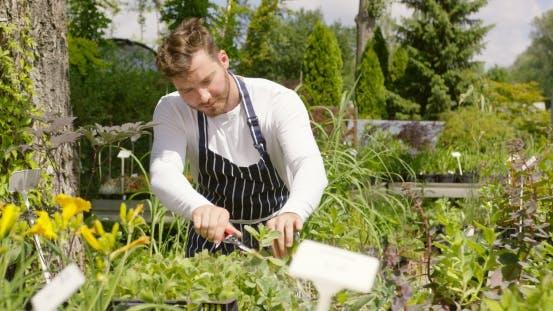 Thumbnail for Man Cutting Plants