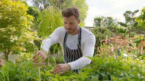 Male Gardener Trimming Plants