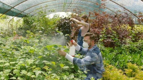 Thumbnail for People Fertilizing Plants in Greenhouse