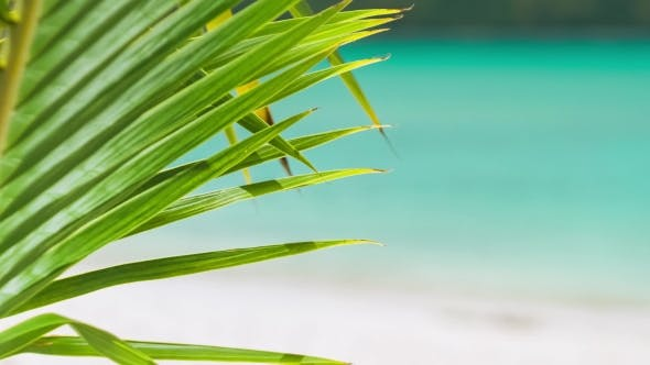 Thumbnail for Palm Leaf Detail.  Footage of a Tropical Palm Tree Leaf in a Slight Breeze and Blurred Blue Ocea