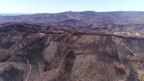 Forest Regeneration After Severe Bushfires