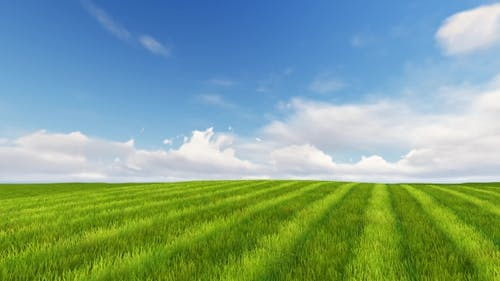 Grünes Feld und bewölkter Himmel 3D Render