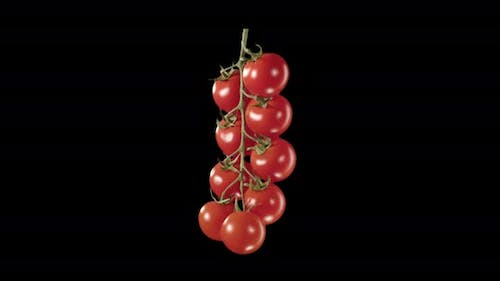Cherry Tomatoes On A Sprig. Alpha Channel
