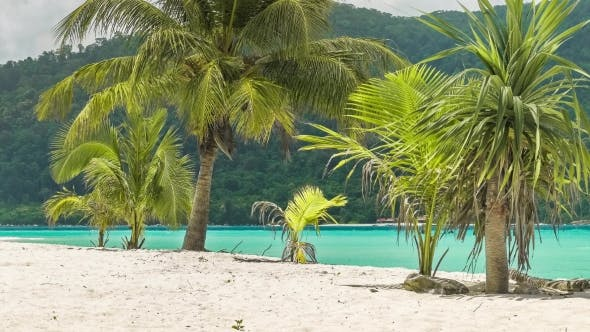 Thumbnail for Tropical Palm Trees in a Slight Breeze on Tropical Sandy Beach with Blue Ocean in Background