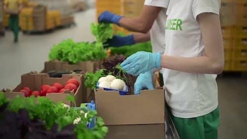 Freiwillige Hilfe, Lebensmittel an Menschen in der Sozialgemeinschaft Spbd zu spenden