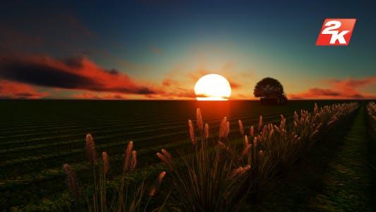 Thumbnail for Sunset Field