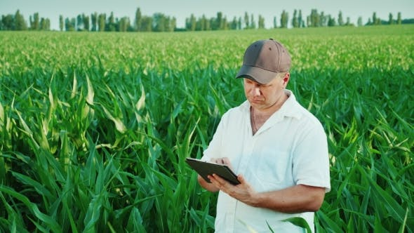 Thumbnail for Middle-aged Male Farmer Working on a Field of Corn