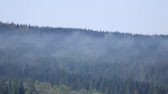 Thumbnail for Clouds Over Tops of Evergreen Tall Fir Trees,