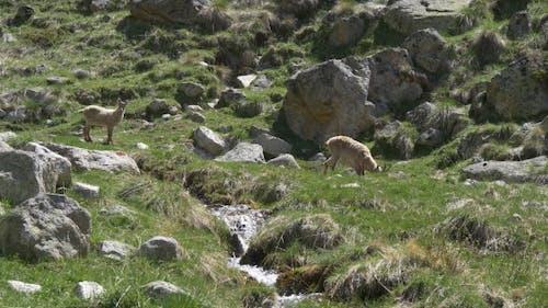 Wildtiere im Hochland