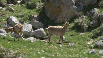 Wildlife of Caucasus