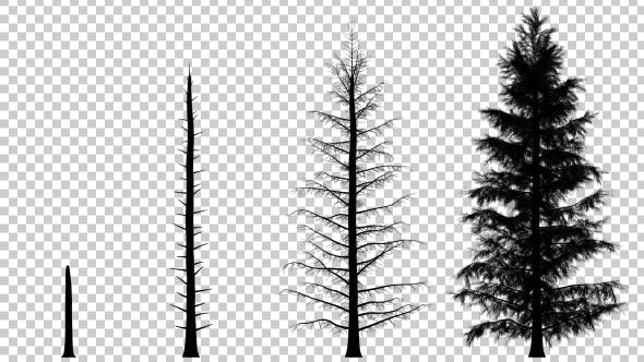 Thumbnail for Growing Pine Tree Silhouette