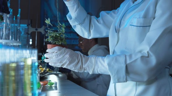 Thumbnail for Scientist Doing Experiments on a Plant