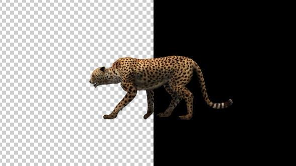 Thumbnail for Cheetah Walking Animation