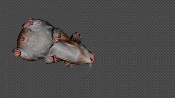 Hamster Die Pack 4 In 1