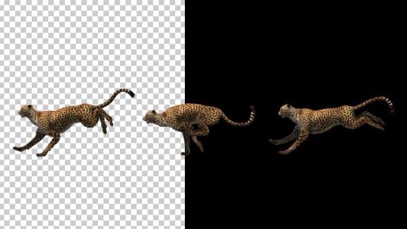 Thumbnail for Cheetah Running