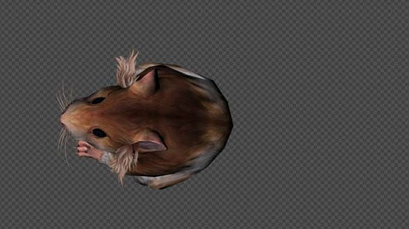 Hamster Attack Pack 4 In 1
