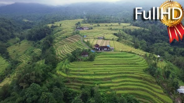 View from Above on Rice Terraces and Fields
