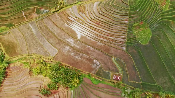 Thumbnail for Vast Rice Fields in Jatiluwih