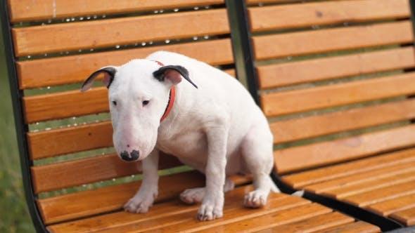 Thumbnail for Lost Sad Puppy Under Rain