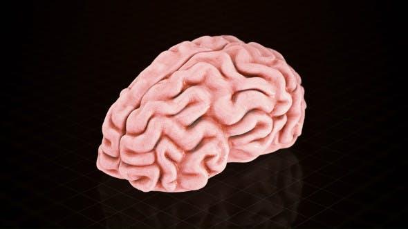 Isolated Brain Turntable