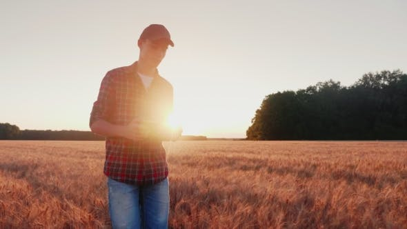 Thumbnail for Young Man Farmer Walking on Wheat Field, Looking at Mature Spikelet