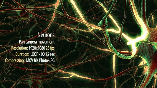Thumbnail for Neurons