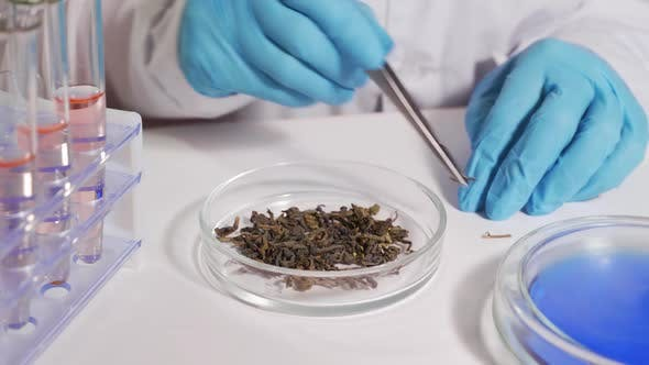 Lab Technician Conducts a Tea Quality Determination in a Modern Laboratory