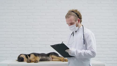 Vet Doctor Checking Health Condition of Little Puppy