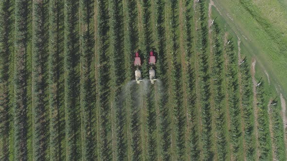 Aerial view of tractors irrigating a plantation