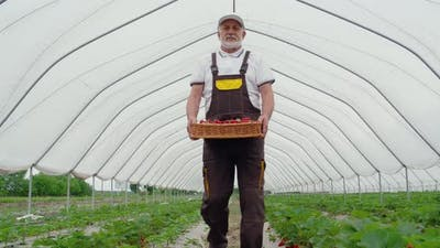Elderly Man Keeping Wicker Basket with Strawberries