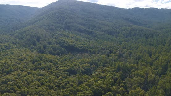 Thumbnail for Natural Forest Drone View - Clean Energy 2020