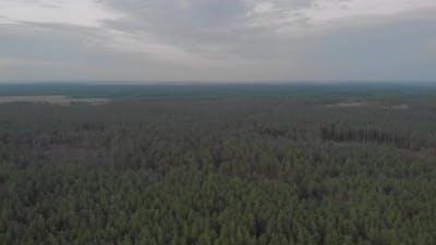 Dusk Forest Aerial