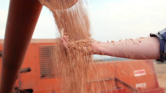 Thumbnail for Harvester Unloading Grains Against Sky
