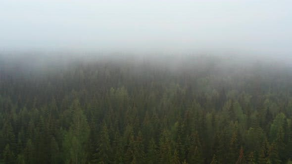 Thumbnail for Pull Away Shot of Forest in Norway Revealing a View with Lush Green Trees