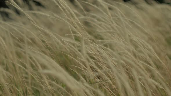 Field On Wind
