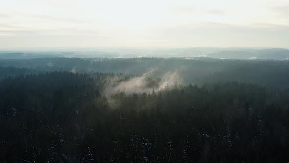 Aerial Cinematic Shot Hilly Winter Forest with Tall Pine Trees