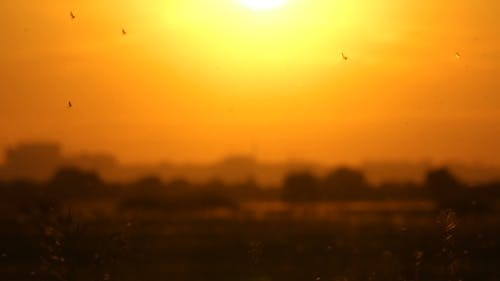Insect Flying on Sunset. City Background.