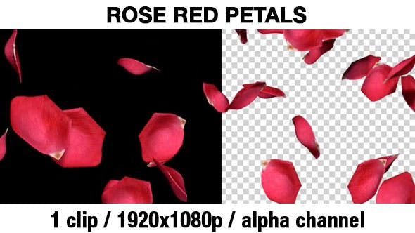 Thumbnail for Falling Red Petals