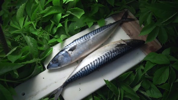 Thumbnail for Raw Scomber Fish Lies on the Board in the Greens Outside, Meals with Fish, Seafood Dish, Roasted and