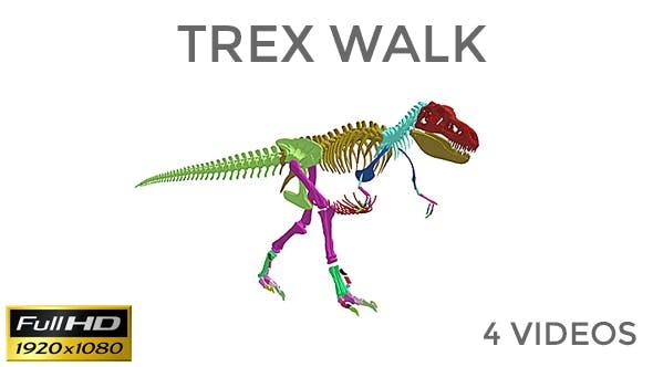 Trex Skeleton Loop Walk Pack