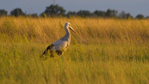Stork on Sunset