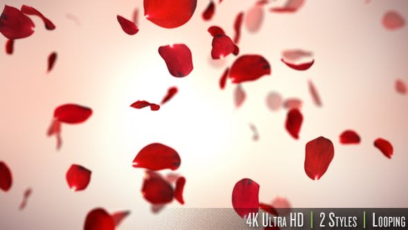 Thumbnail for Falling Red Rose Petals Background 4K