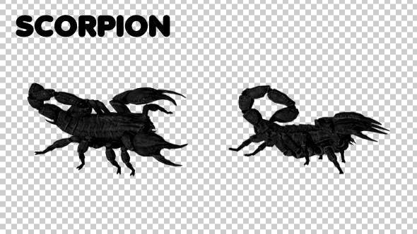 Thumbnail for Scorpion