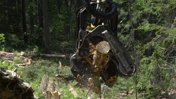 Thumbnail for Mechanical Arm Cuts a Freshly Chopped Tree Trunk in a Forest