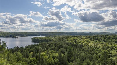 Algonquin Provincial Park, Canada, the Park During the Summertime