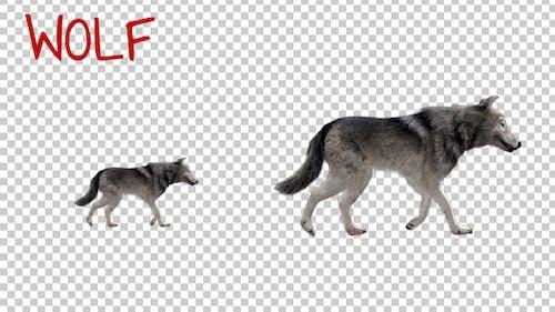 Realistic 3D Wolf Walk Animation - 2