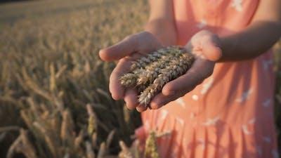 The Wheat Ears