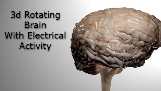 Thumbnail for Rotating Brain With Electrical Activity